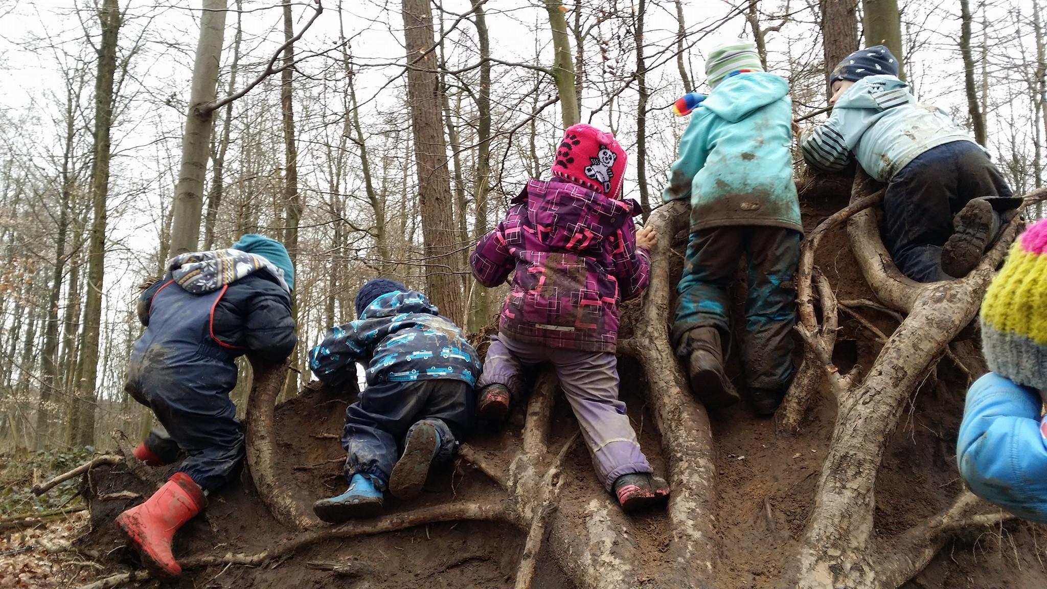 waldameisen_waldkindergarten_berne_klettern